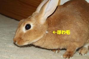 Img_78951